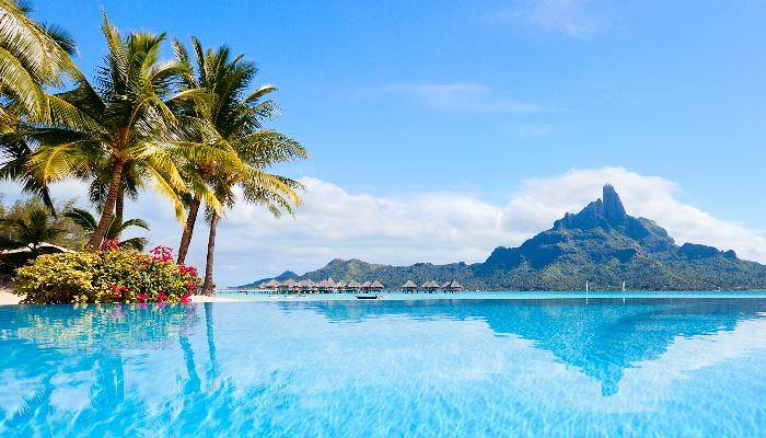 French Polynesian sea and plants